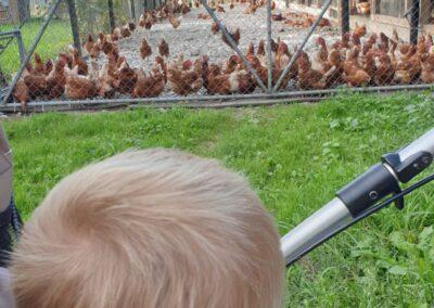 den Bauernhof besuchen