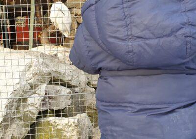 die Tiere im Vogelkäfig kennenlernen